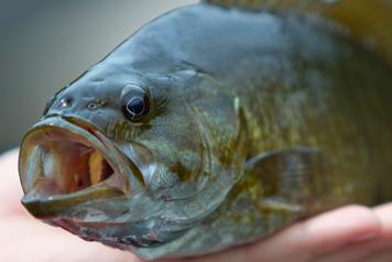 Bass-Fishing-2